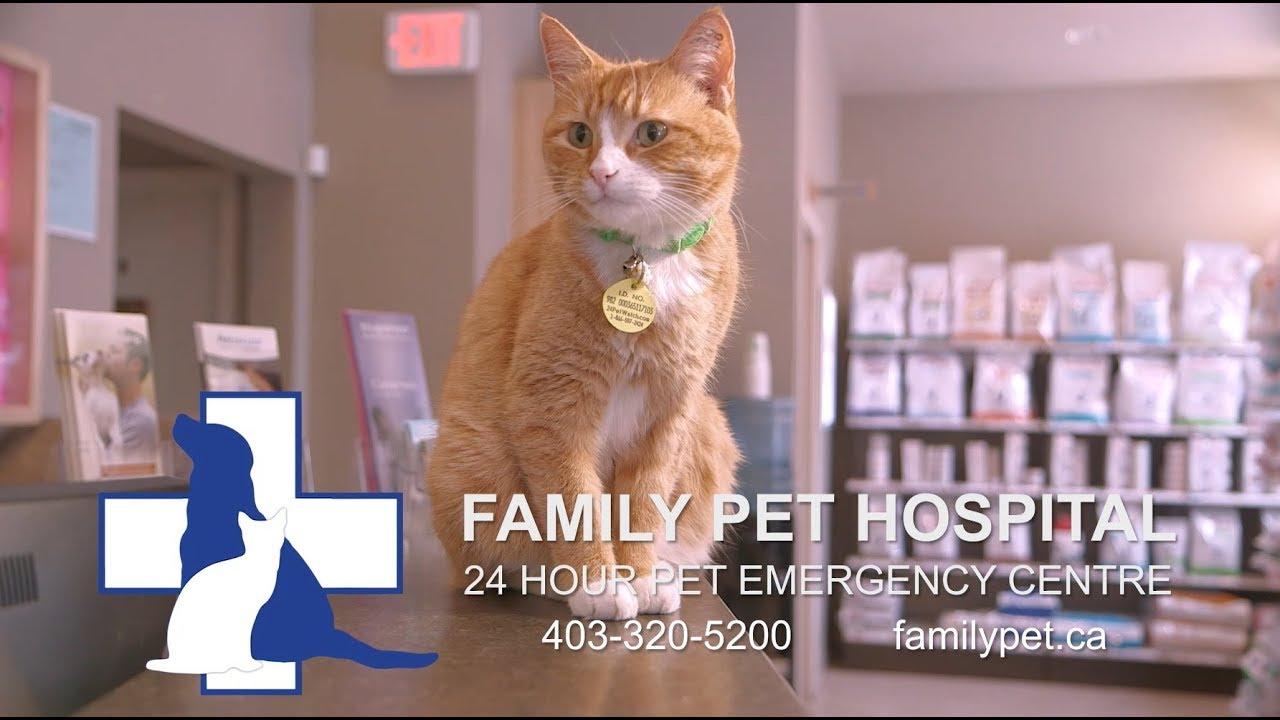 Veterinarian in Lethbridge, Alberta | Family Pet Hospital