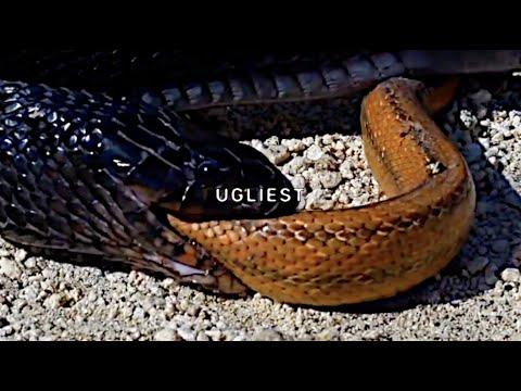 $UICIDEBOY$ – Ugliest