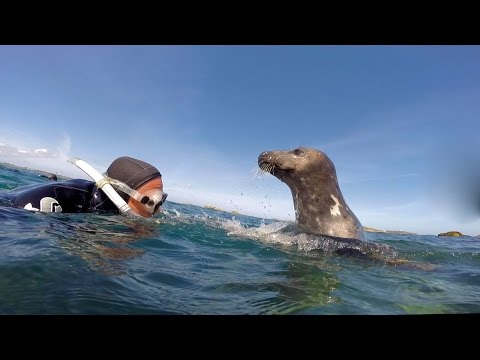 Snorkling with seals-Isles of Scilly (near to St.Martins)