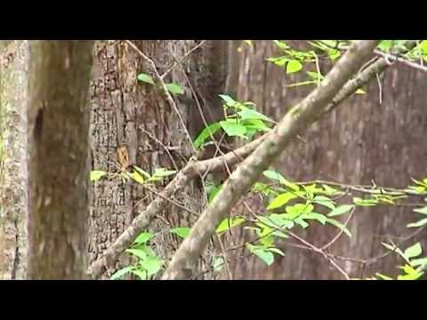 Lord of the Tree Rings - Science Nation from YouTube · Duration:  2 minutes 29 seconds
