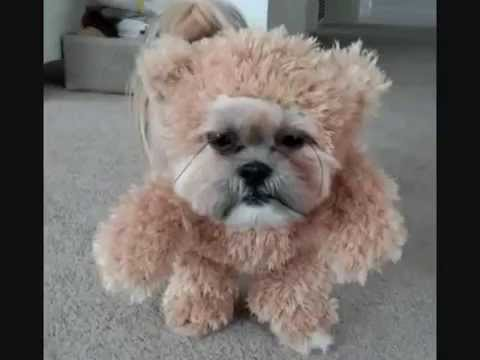 Living Teddy Bear, Cutest Dog Costume How to Make - YouTube