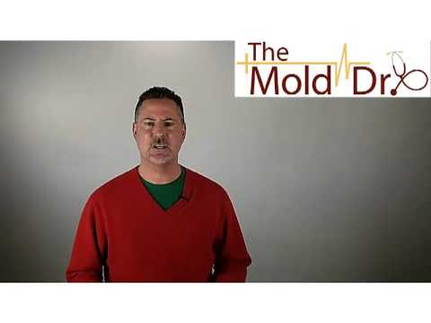 Can You Paint Over Mold Youtube