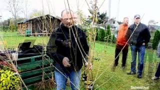 Jak przycinać drzewka owocowe - Sadowniczy.pl