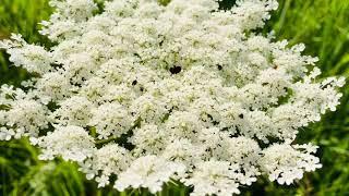 Полевые  цветы\ Цветы//Природа/Landscape \ Valentyna life