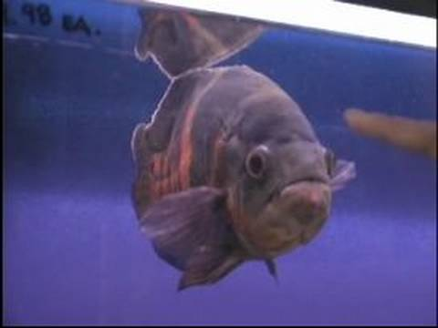 How to buy aquarium fish which types of pet fish are for What kind of fish do i have