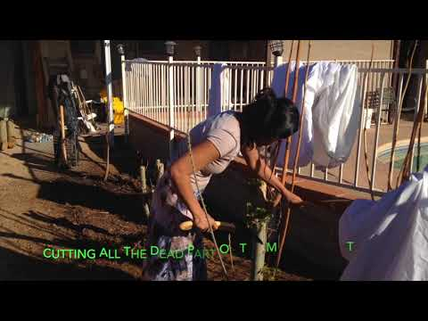 Arizona life+FilipinaVlogs+Gardening in the desert.