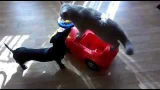 Кот любит машину а собака любит кота