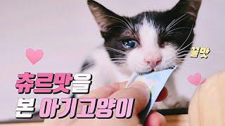 스트릿출신 아기고양이 츄르맛보고 눈물이 그렁그렁/☔비 맞으며 밥 기다리는 굶주린 길고양이 /김밥만들기