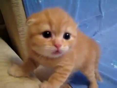 Самый милый кот мира