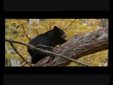 Native American - Music & Film- Bears Lakota Mato Tipila