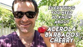 Ep185 - Acerola // Barbados cherry tree // A Delicious Medicinal Fruit!