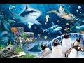 Sea Life London Aquarium 2015 HD