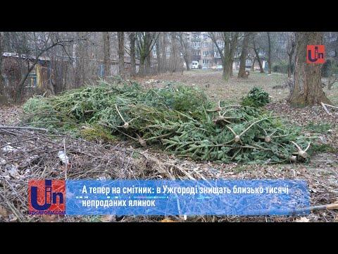 А тепер на смітник: в Ужгороді знищать близько тисячі непроданих ялинок