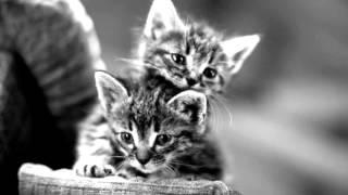 Милейшие кошки в черно белых тонах показ слайдов 2015!