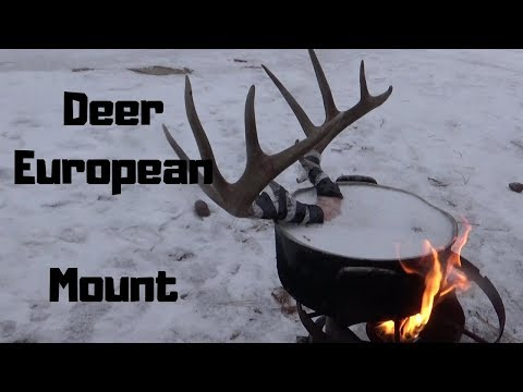 Whitetail Deer european mount DIY
