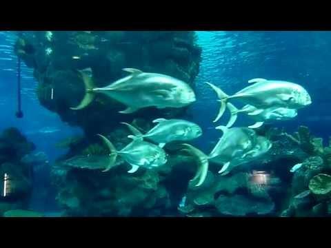 Blue Planet Aquarium Chester, Cheshire.