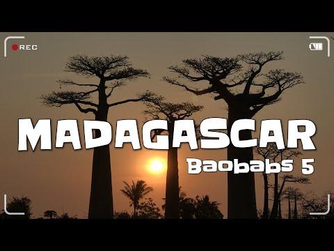 MADAGASCAR |  Baobabs Morondava | [ 4K ] 5/17