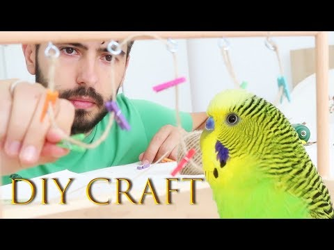 How To Build Your Own Birds Playground [DIY Project]