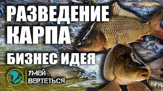 Разведение карпа Рыбное хозяйство как бизнес идея