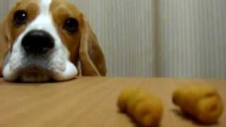 テーブルの上におやつを置き忘れたふりをして、部屋に一人にしてみまし...
