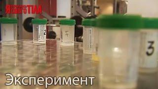 Как по запаху и цвету спермы определить состояние мужского здоровья!