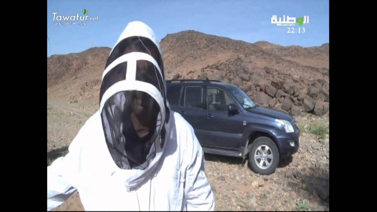 عبر قناة الوطنية ، قريني أمينوه يرافق النحالة في آدرار