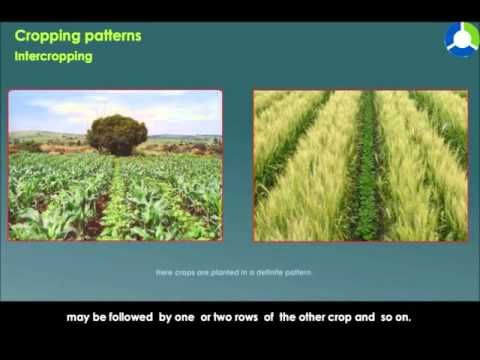 CROPPING  PATTERNS
