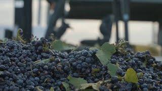 Australian wine-maker eyes Chinese market