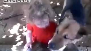 Dziecko i pies przy wodopoju