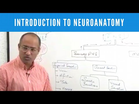 Introduction to Neuroanatomy - Neuroscience - Neurophysiology