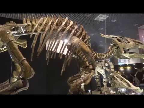 サウロロフス  Saurolophus:「大恐竜展」ゴビ砂漠の驚異