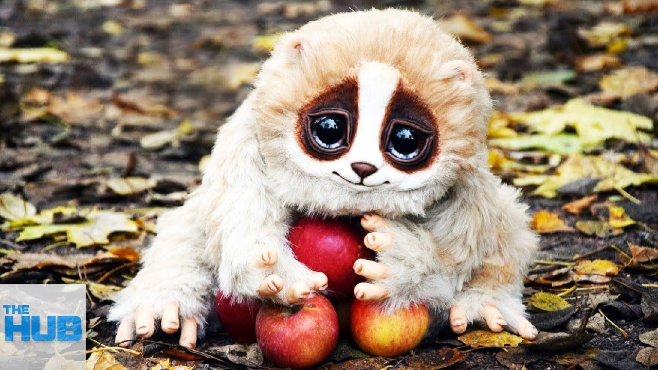 animals dangerous adorable super cute animal cutest most animales
