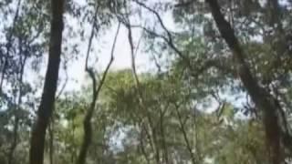 Ecos de Aruanda (PARTE 2): um encontro entre religiosidade e conservação ambiental