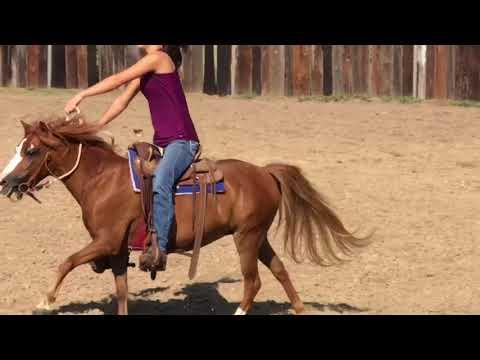 Fallon pony ride