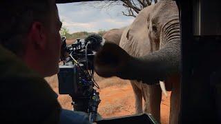 Curious Elephant Invades Car | BBC Earth