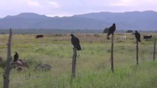 chihuahua août, à la recherche du bétail 2010 # 4