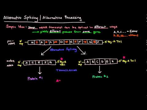 Alternative Splicing / Alternative Processing (Eukaryotes)