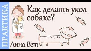 Как делать укол собаке? Советы ветеринара(Как правильно делать уколы собаке, кошке. Виды уколов: подкожно, внутримышечно и внутривенно. Делаем укол..., 2016-02-08T13:57:54.000Z)