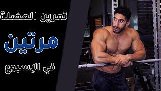 تمرين العضلة مرتين في الإسبوع   سر التطور العضلي !