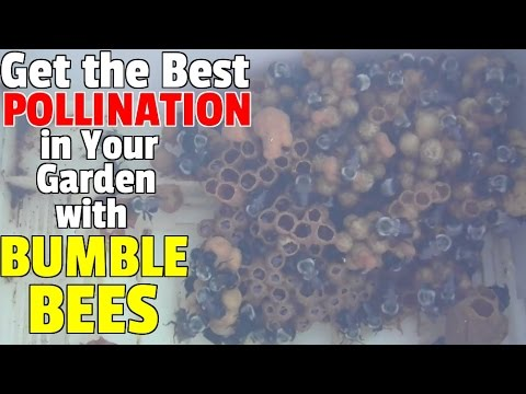 Get the Best Pollination in Your Garden with a Bumble Bee Ne