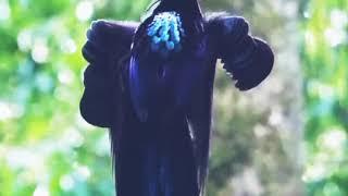 Very beautiful bird so nice don