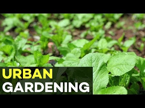 Urban Farming and Container Gardening in your Backyard