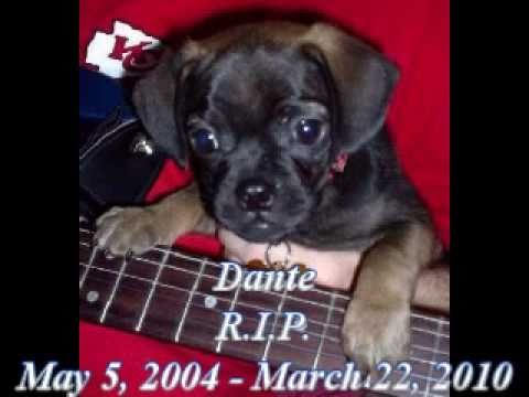 Dante: R.I.P. May 5, 2004 - March 22, 2010