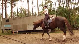 Упражнения, направленнык на улучшение посадки всадника | Дивные кони