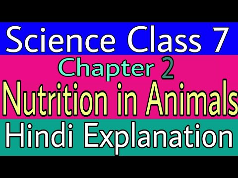 Nutrition in animals Class 7