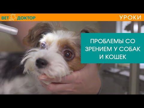 Как проверить зрение у собаки