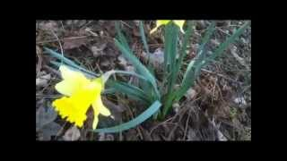 Wild flowers, onions, daffodills