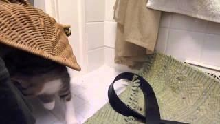Kittens in wicker frog wastebasket