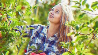 Дегустация яблок. Самые вкусные сорта. Секреты агротехники.