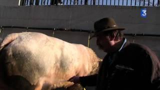 SIA 2012 : la douche des bovins